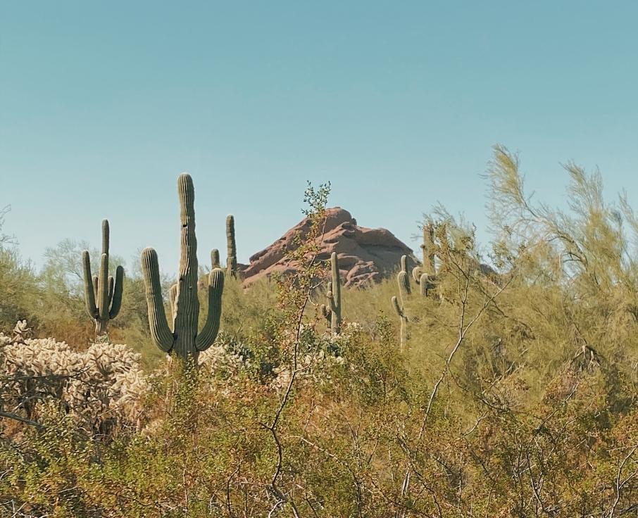 Desert Botanical Gardens view in Phoenix, AZ